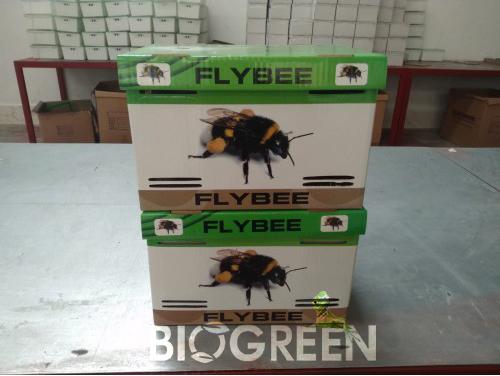 Flybee-Bombus-Arisi-3