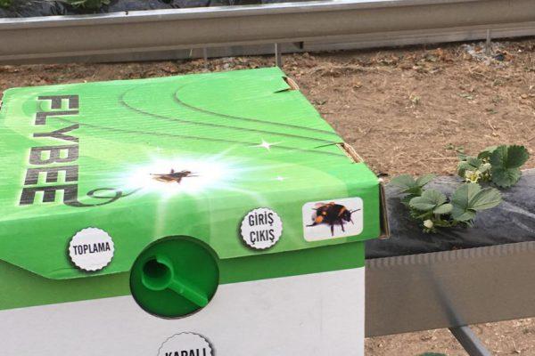 flybee bombus arısı